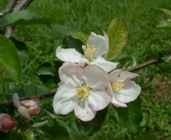 Bunkum Bloom