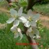 Burgundy Bloom
