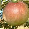 Fallawater Fruit
