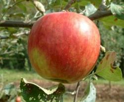 Higdon Fruit