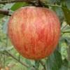 Jarrett Fruit