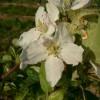 Junaluska Bloom