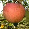 Kidds Orange Red Fruit