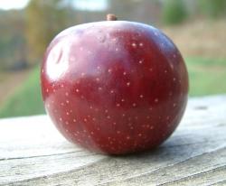 Lowry Fruit