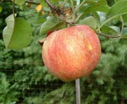 Moyers Spice Fruit