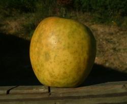 Porter Fruit