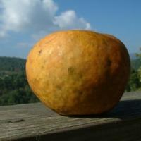 Pumpkin Sweet