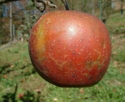 Stark Fruit