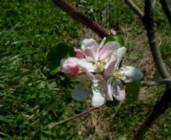 Twenty Ounce Bloom