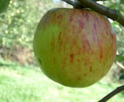 Twenty Ounce Fruit