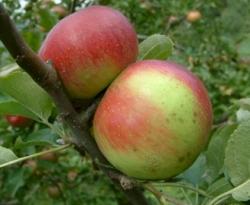 Wagener Fruit