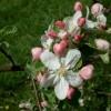 Haas Bloom