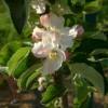 Abram Bloom