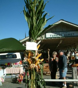 Ashe County Farmers' Market, West Jefferson, NC