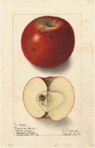 Lithograph from 1905 USDA Agricultural Yearbook