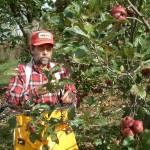 Ron Picking Apples