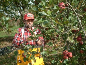 Ron Picking Apples